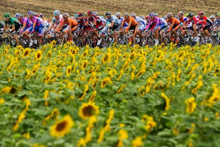 TDF The sunflowers were out on display despite the rain